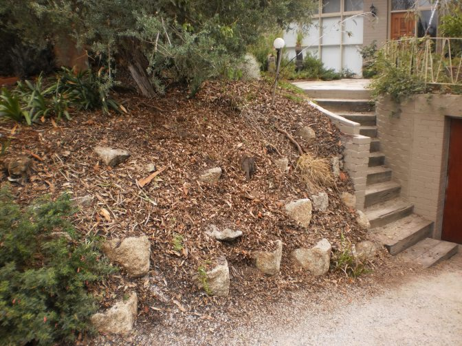 The driveway embankment is cleared of the Kennedia and struggling grasses are pruned back.