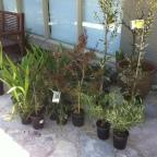 Planting an Australian Midcentury Modern Garden
