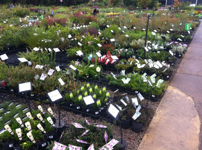 Plenty of options at your local nursery! This one is Plantmark