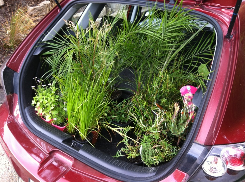 While it always looks like a heap of plants in your boot, they don't go very far on the ground!
