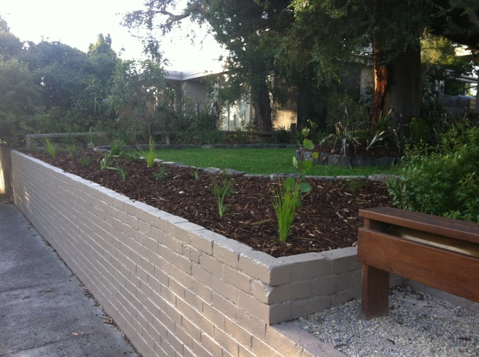 A poor quality morning photo of our planting to the front wall.