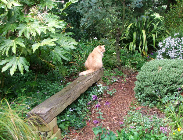 cat-wood-bench