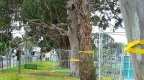 A letter to the Premier | Stop this needless tree removal