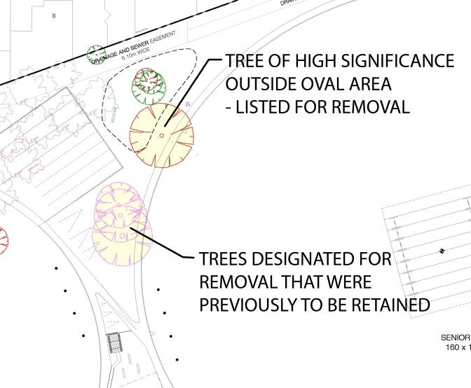 tree-detail-1